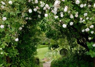 Garden - rose arch